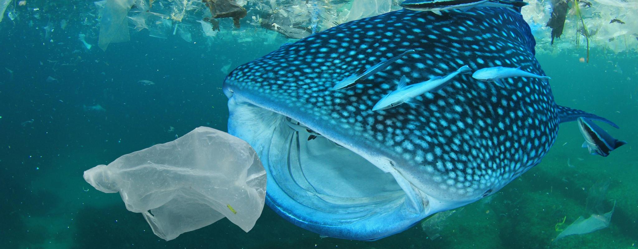 Europese richtlijn voor minder wegwerpplastic in zee (SUP-richtlijn)